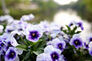 flowers-2407638_640